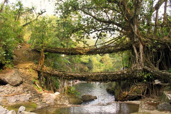 Clamber through the root bridges in Cherrapunjee